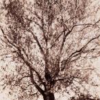Milan Norton Fulton Gallagher Tree