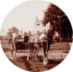 Milan Norton Horse Fulton Farm